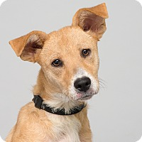 Adopt A Pet :: Candy - Westfield, NY