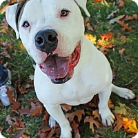 Adopt A Pet :: Sammy-FOSTER NEEDED!! - Lincoln, CA