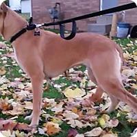 Adopt A Pet :: Sophia - East Sparta, OH