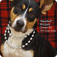 Adopt A Pet :: Meatball - Newnan City, GA