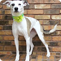Adopt A Pet :: Precious - Benbrook, TX