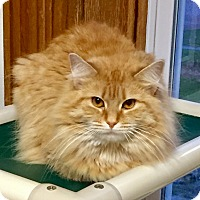Adopt A Pet :: Nina - Greensburg, PA