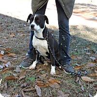 Adopt A Pet :: Lucy - Washington, GA