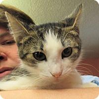 Adopt A Pet :: Lucille - Reeds Spring, MO