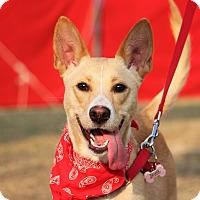 Adopt A Pet :: Reese - San Mateo, CA
