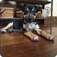 Adopt A Pet :: Sydney - Nashville, TN