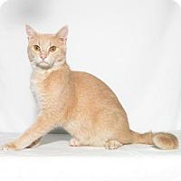 Adopt A Pet :: Gustav - Lufkin, TX