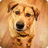 Adopt A Pet :: Huck - Lake Odessa, MI
