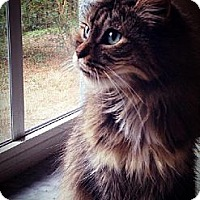 Adopt A Pet :: Dixie - Citrus Springs, FL