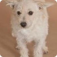 Adopt A Pet :: Fenway - Phoenix, AZ