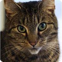 Adopt A Pet :: Hanna - Albany, NY