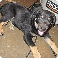 Adopt A Pet :: Morgan (adoption pending) - Phoenix, AZ