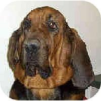 Adopt A Pet :: Jamal - Phoenix, AZ