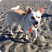 Adopt A Pet :: PALOMA, 20 Lbs! - Irvine, CA