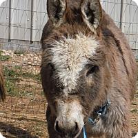 Adopt A Pet :: Watson - Bennett, CO