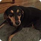Adopt A Pet :: Annie (Selma)