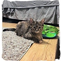 Adopt A Pet :: Crabby Pants - Olmsted Falls, OH