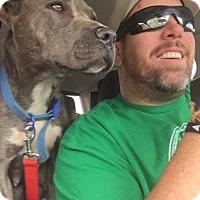 Adopt A Pet :: Rosalee - Odessa, TX