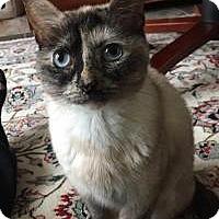 Adopt A Pet :: Saidie - East Hanover, NJ