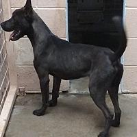 Adopt A Pet :: Seven - Odessa, TX