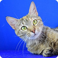 Adopt A Pet :: Lilly - Carencro, LA