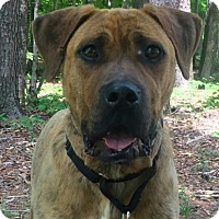 Adopt A Pet :: Boz - Harrisonburg, VA