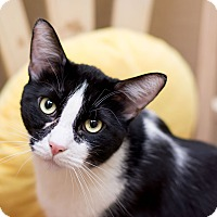 Adopt A Pet :: Bob - Fountain Hills, AZ