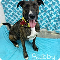 Adopt A Pet :: Bubby - Melbourne, KY