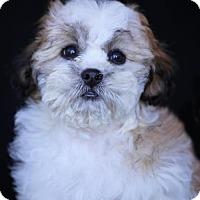 Adopt A Pet :: Faith - SAN PEDRO, CA