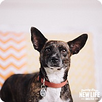 Adopt A Pet :: Lily - Portland, OR