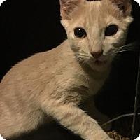 Adopt A Pet :: Gold nugget - Cincinnati, OH
