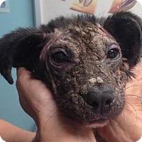 Adopt A Pet :: Wish - High Point, NC