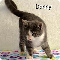 Adopt A Pet :: Danny - DuQuoin, IL
