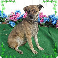 Adopt A Pet :: THELMA - Marietta, GA