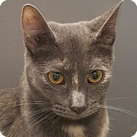 Adopt A Pet :: Belle2 - Walworth, NY