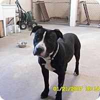 Adopt A Pet :: Cooper -  Cat-Friendly Well Behaved Boy! - Rowayton, CT