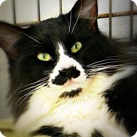 Adopt A Pet :: Daddio - Casa Grande, AZ