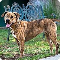 Adopt A Pet :: Chloe - Newport Beach, CA