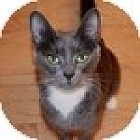 Adopt A Pet :: Candy - Vancouver, BC