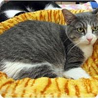 Adopt A Pet :: Winnie - Harrisburg, NC