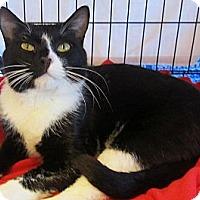 Adopt A Pet :: Gabriel - Seminole, FL