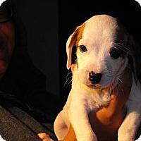 Adopt A Pet :: Jill - Alamosa, CO