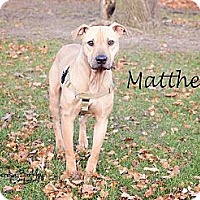 Adopt A Pet :: Matthew - Chicago, IL