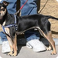 Adopt A Pet :: Turby - Gilbert, AZ