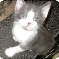 Adopt A Pet :: Freckle - Dallas, TX