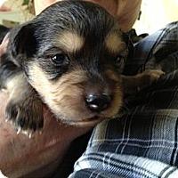 Adopt A Pet :: Patrick - Los Angeles, CA