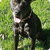 Adopt A Pet :: Kylie - Des Peres, MO