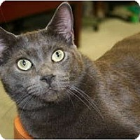 Adopt A Pet :: Rainer - Bonita Springs, FL