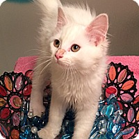 Adopt A Pet :: Arya - Edmond, OK