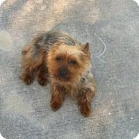 Adopt A Pet :: Princess - North Port, FL